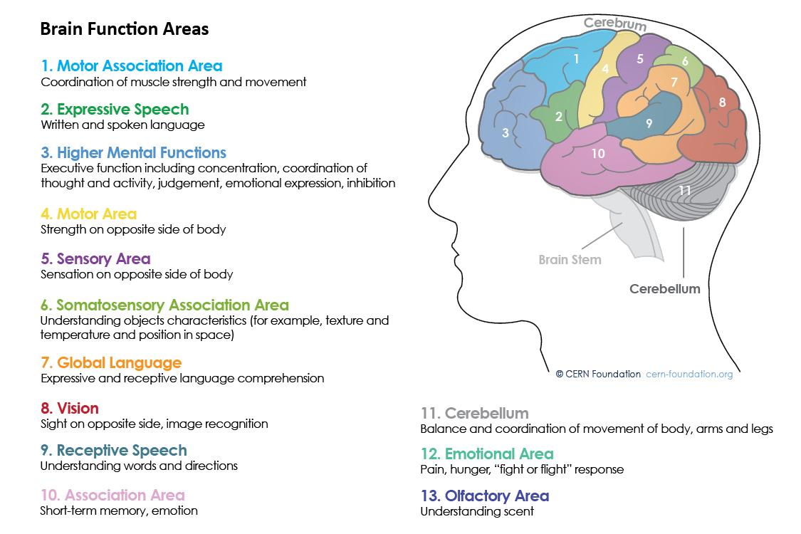 Spine and Brain Tumor and Anatomy | CERN Foundation